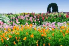 Giacimento di fiori Immagine Stock Libera da Diritti