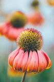 Giacimento di fiori Immagine Stock