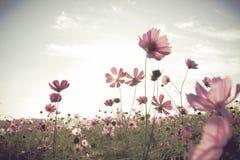 Giacimento di fiori d'annata dell'universo Immagini Stock