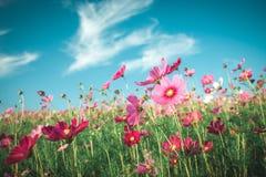 Giacimento di fiori d'annata dell'universo Immagine Stock