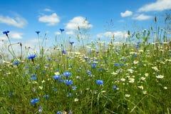 Giacimento di fiori di estate Fotografia Stock