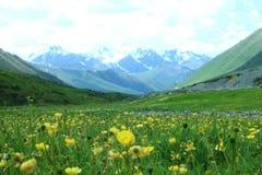 Giacimento di fiori giallo con cielo blu e la montagna della neve immagini stock libere da diritti