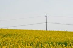Giacimento di fiori giallo di Crotalaria con i pali di potere Fotografie Stock