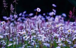 Giacimento di fiori selvaggi Fotografia Stock Libera da Diritti