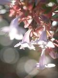 Giacimento di fiori selvaggi immagine stock