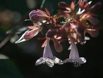 Giacimento di fiori selvaggi immagine stock libera da diritti