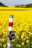 Giacimento di fioritura dorato del seme di ravizzone con il segno turistico Fotografia Stock