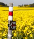 Giacimento di fioritura dorato del seme di ravizzone con il segno turistico Immagine Stock
