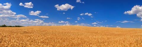 Giacimento di grano fotografia stock