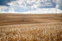 Giacimento di grano Immagini Stock