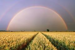 Giacimento di grano - agricoltura Immagini Stock Libere da Diritti