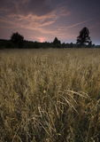 Giacimento di grano al tramonto Fotografie Stock Libere da Diritti
