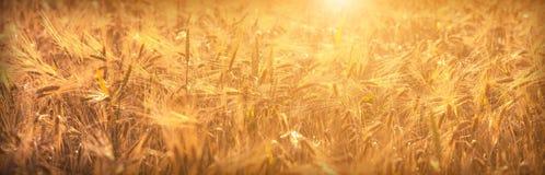 Giacimento di grano background_1 immagini stock