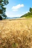 Giacimento di grano con gli alberi e le montagne Immagini Stock
