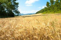 Giacimento di grano con gli alberi e le montagne Fotografie Stock