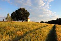 Giacimento di grano con la cappella in Slovacchia Fotografia Stock