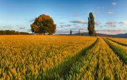 Giacimento di grano con la cappella in Slovacchia Immagine Stock