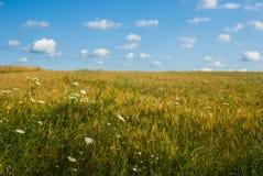 Giacimento di grano con poche nuvole in un cielo blu Fotografia Stock Libera da Diritti