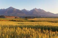 Giacimento di grano con Tatras nel fondo Fotografia Stock