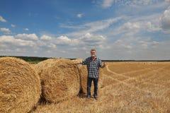 Giacimento di grano d'esame dell'agricoltore dopo il raccolto e gesturing Immagini Stock
