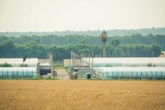Giacimento di grano davanti all'serre immagine stock libera da diritti