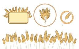 Giacimento di grano della pagina, struttura del grano ed icona inferiori Elementi di disegno Vettore Illustrazione isolata Immagine Stock