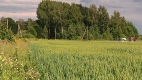 Giacimento di grano dello spruzzo del trattore al hebicide, antiparassitario vicino alla foresta archivi video