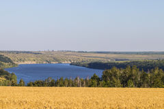 Giacimento di grano di agricoltura al paesaggio rurale della riva del fiume Fotografie Stock Libere da Diritti