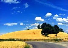 Giacimento di grano di estate Fotografia Stock