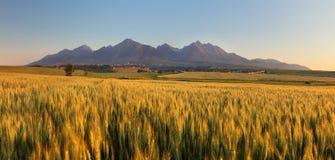 Giacimento di grano di estate in Slovacchia, Tatras fotografie stock