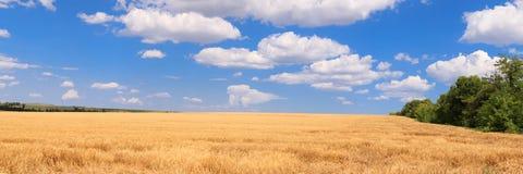 Giacimento di grano di panorama immagini stock libere da diritti