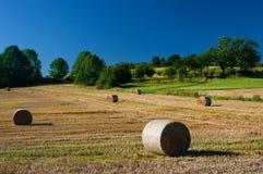 Giacimento di grano dopo il raccolto Immagine Stock