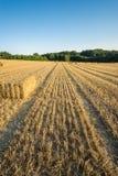 Giacimento di grano dopo il tempo di raccolto con un cielo blu La Baviera, Germania verticale Fotografia Stock Libera da Diritti