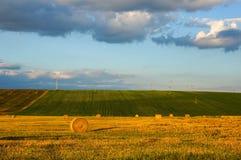 Giacimento di grano dorato Immagine Stock Libera da Diritti
