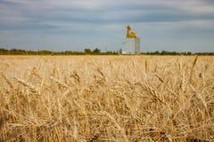 Giacimento di grano dorato con l'elevatore di grano nella distanza Fotografie Stock Libere da Diritti