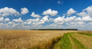 Giacimento di grano dorato, strada da parte a parte, cielo blu Fotografia Stock