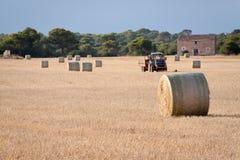 Giacimento di grano durante il raccolto immagine stock libera da diritti