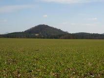 Giacimento di grano e collina arrotondata Il campo delle tracce in primavera Fotografie Stock