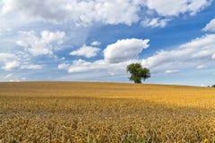 Giacimento di grano e l'albero solo Fotografia Stock Libera da Diritti
