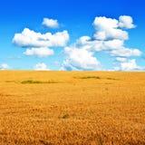 Giacimento di grano e paesaggio minimalistic del cielo blu Fotografia Stock Libera da Diritti