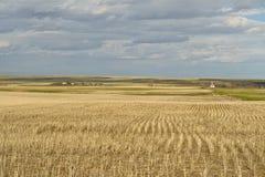 Giacimento di grano e piccolo villaggio in praterie canadesi Fotografia Stock