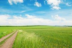 Giacimento di grano e strada campestre Immagini Stock