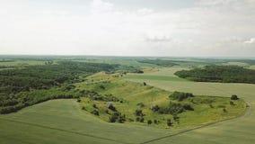 Giacimento di grano e vista aerea della collina Ondeggiamento verde del grano delle orecchie nel vento Raccolto, grano che cresce stock footage