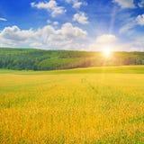 Giacimento di grano ed alba nel cielo Fotografia Stock