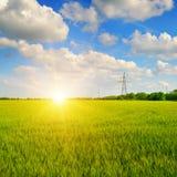 Giacimento di grano ed alba nel cielo blu Fotografie Stock Libere da Diritti