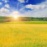 Giacimento di grano ed alba nel cielo blu Fotografia Stock