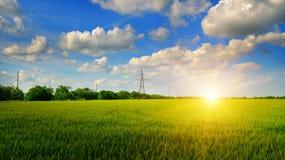 Giacimento di grano ed alba nel cielo blu Fotografia Stock Libera da Diritti
