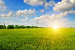 Giacimento di grano ed alba nel cielo blu Immagine Stock