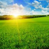Giacimento di grano ed alba nel cielo blu Immagini Stock