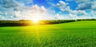 Giacimento di grano ed alba nel cielo blu Fotografie Stock